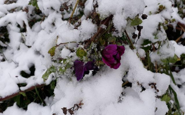 Sturm, Regen, Graupeln – der Herbst ist da – und auch der Schnee ;)