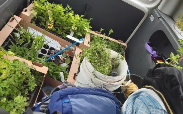 Jungpflanzen für den Garten
